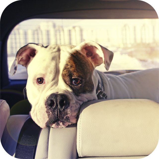 Polished paws mobile dog grooming let the groomer come to you no driving solutioingenieria Image collections
